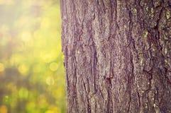 在自然背景的树卡车 免版税库存图片