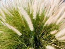 在自然背景的特写镜头白色草花 免版税库存照片