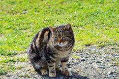 在自然背景的猫 免版税库存照片