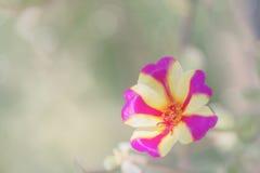 在自然背景的紫色和黄色花 免版税图库摄影