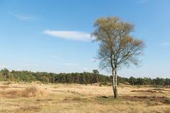 在自然风景的春天 免版税库存图片