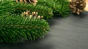 在自然黑石背景的自然绿色云杉的枝杈 免版税库存图片