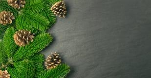在自然黑石背景的自然绿色云杉的枝杈 免版税图库摄影