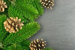 在自然黑石背景的自然绿色云杉的枝杈 免版税库存照片