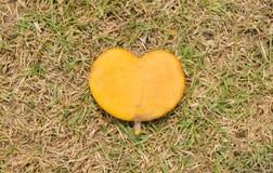 在自然绿草背景的心形的叶子 免版税库存图片
