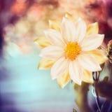 在自然bokeh背景的美丽的花 免版税图库摄影
