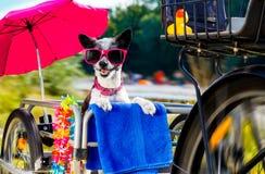 在自行车拖车或篮子的狗 库存照片