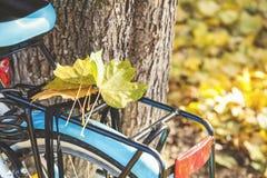 在自行车树干的下落的槭树叶子  免版税库存照片
