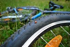 在自行车的瓢虫在森林里 免版税库存照片