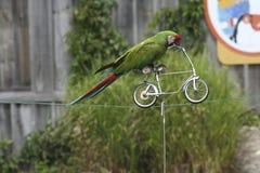 在自行车的鹦鹉 免版税库存照片