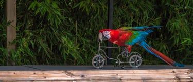 在自行车的鹦鹉 库存图片