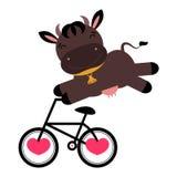 在自行车的滑稽的母牛 库存照片