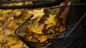 在自行车篮子的黄色秋叶 免版税库存图片