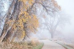 在自行车足迹的有雾的11月早晨 免版税库存照片