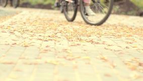 在自行车道路的秋叶 循环的公园 炫耀家庭假日 股票视频