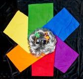 在自豪感彩虹颜色的多彩多姿的T恤杉和假发和太阳镜 库存图片