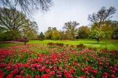 在舍伍德庭院公园的郁金香,在巴尔的摩,马里兰 免版税库存照片