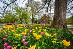 在舍伍德庭院公园的郁金香,在巴尔的摩,马里兰 免版税库存图片