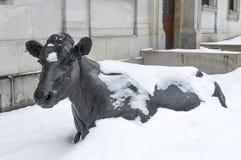 在舍布鲁克街上的蒙特利尔平静的母牛 库存照片