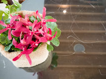 在舒适咖啡桌上的一朵红色兰花 免版税库存图片