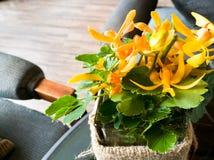在舒适咖啡桌上的一朵黄色兰花 免版税库存图片
