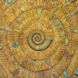 在舡鱼壳的一个惊人的斐波那奇样式 免版税库存图片