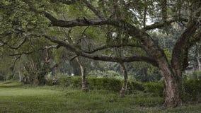 在航路, Gec龙目岛高尔夫球场,印度尼西亚的树 免版税库存图片