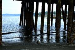 在船坞下 库存照片