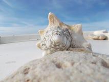 在船坞的大壳在海滩前面 免版税库存图片
