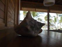 在船坞的大壳在海滩前面 免版税图库摄影