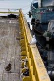 在船被停泊的船坞的一个温暖的夏天晚上 免版税库存照片