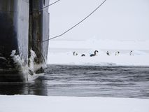 在船附近的皇企鹅 免版税库存图片