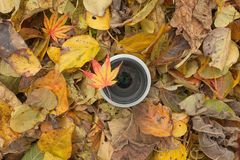 在色的叶子背景的一个摄象机镜头在秋天 免版税库存照片