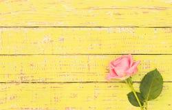在色的木头的一朵桃红色玫瑰花与拷贝空间 图库摄影