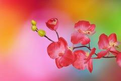 在色的背景的兰花 免版税库存照片