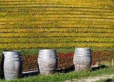 在色的葡萄园前面的三个木葡萄酒桶在一个秋天晴天 库存图片