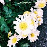 在芝加哥植物园的花俏丽的群 图库摄影
