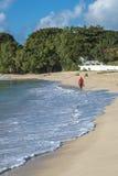 在芦苇海湾巴巴多斯的海滩 免版税图库摄影