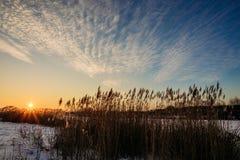 在芦苇的日落在湖 库存图片