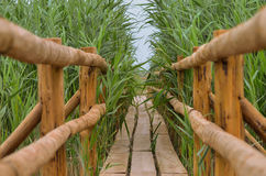 在芦苇的木人行桥 图库摄影
