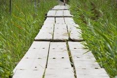 在芦苇的木道路 免版税库存照片