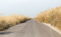 在芦苇的柏油路 免版税库存图片
