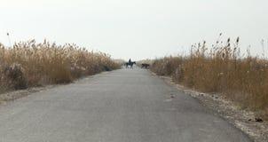 在芦苇的柏油路 免版税库存照片