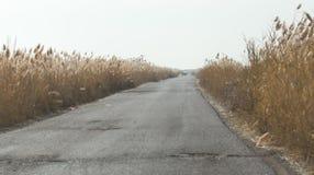 在芦苇的柏油路 库存图片