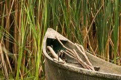在芦苇的渔船 库存图片
