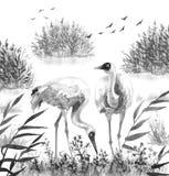 在芦苇的白色起重机鸟 向量例证