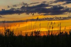 在芦苇的黄色日落 免版税库存图片