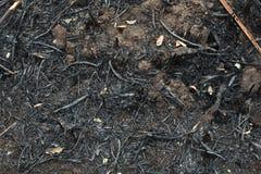 在芦苇以后被烧的灰  库存图片