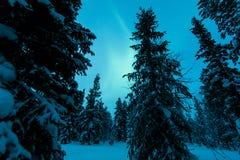 在芬兰森林的极光borealis 免版税库存图片