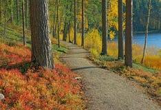 在芬兰taiga的道路 免版税库存照片